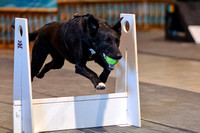 Flyball 120310_005