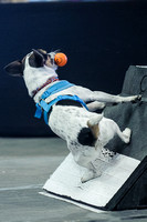 Flyball 120421_006