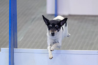 Flyball 120421_010