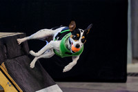 Flyball 120421_002