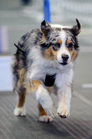 Flyball 120421_001
