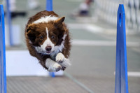 Flyball 120421_004