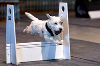 Flyball 120310_007