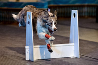 Flyball 120310_016