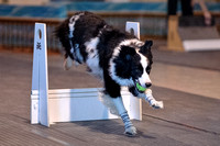 Flyball 120310_014