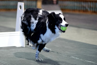 Flyball 120310_015