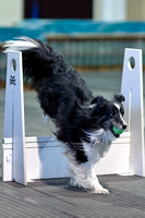 Flyball 120310_012
