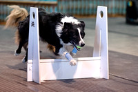 Flyball 120310_002