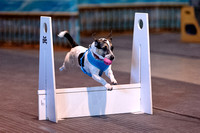 Flyball 120310_018