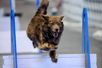 Flyball 120421_018