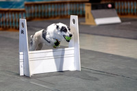 Flyball 120310_021